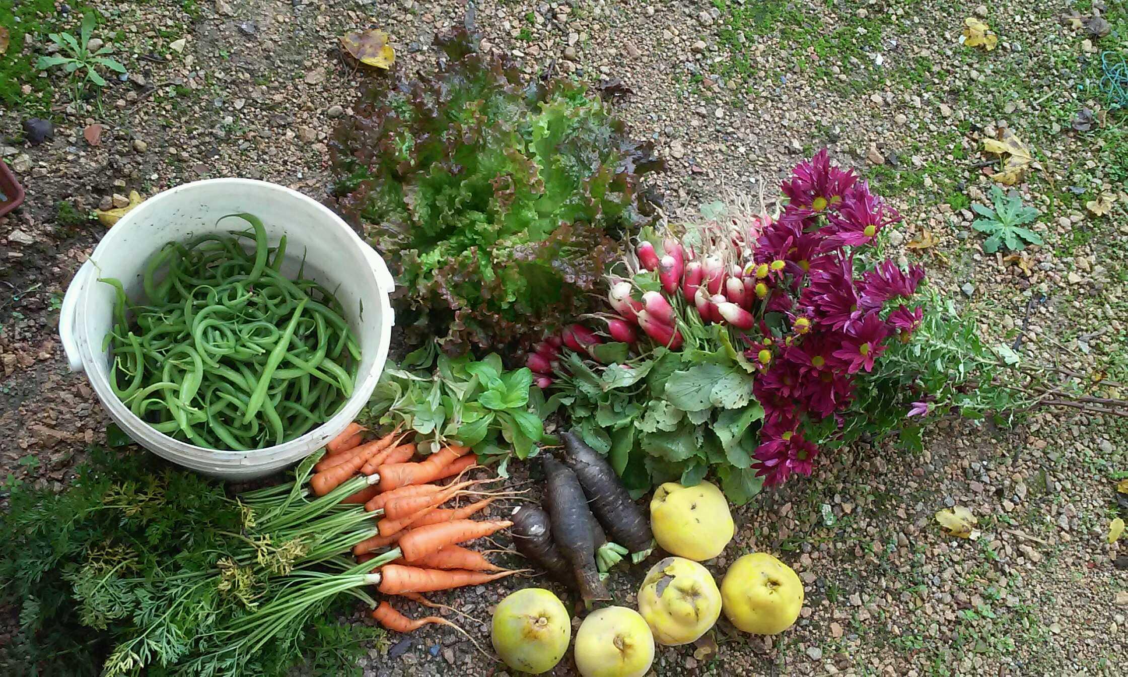 Derniers petits légumes du jardin