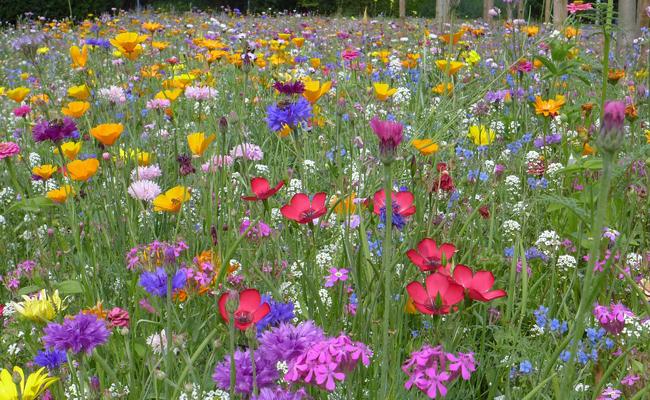 Les fleurs à semer