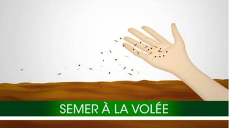 seme_volée.png